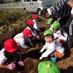 芋掘り②-4